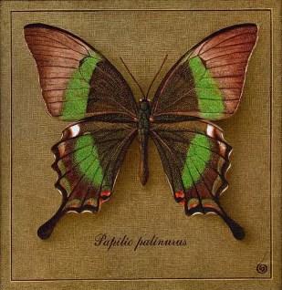 butterfly бабочка зеленая