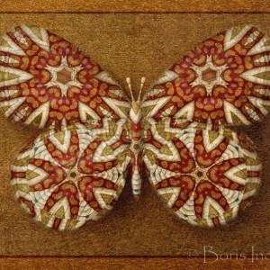 elegy_symbol_butterfly_15