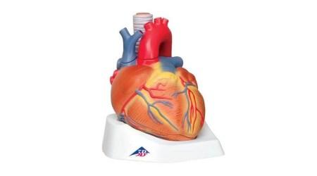 Heart, 7 Part