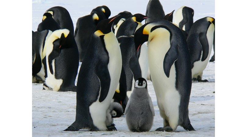 Experiments Penguin Huddling
