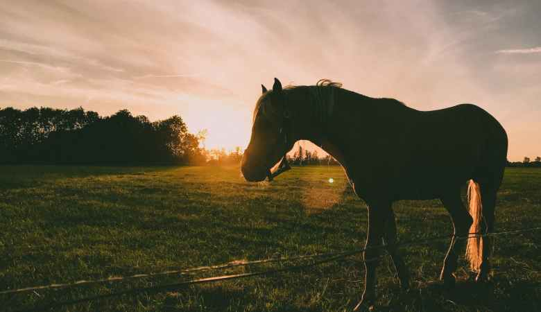 silhouette photography of horse