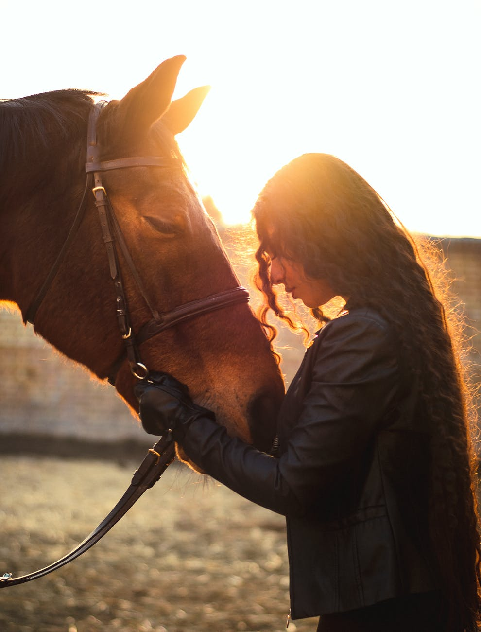 young woman stroking horse in sunlight
