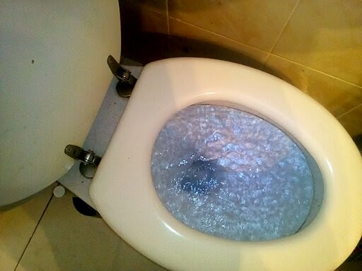 Indy's BLOG – Toilet Issues!