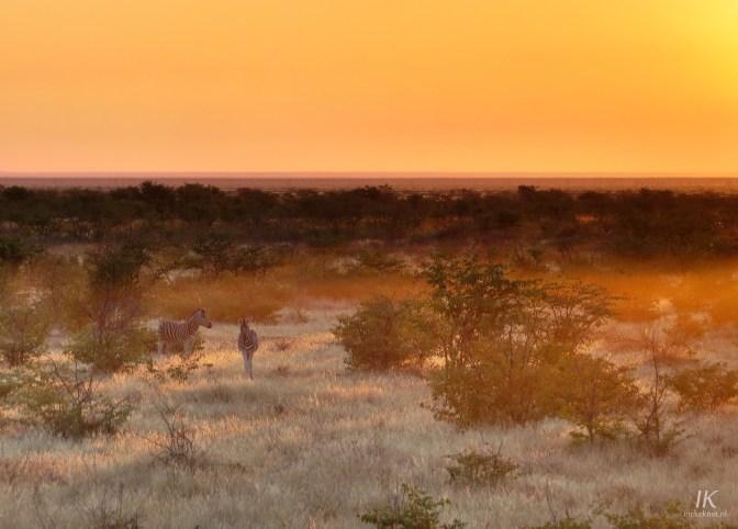 Bergzebra's tijdens een prachtige zonsopkomst in Olifantsrus