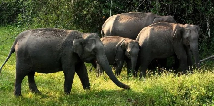 bandipur_national_park