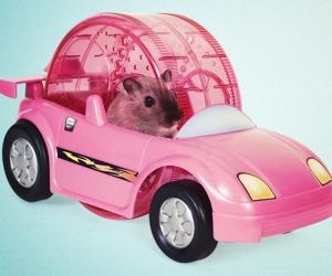 hamster-racer-set