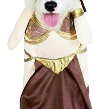 Yoda cão