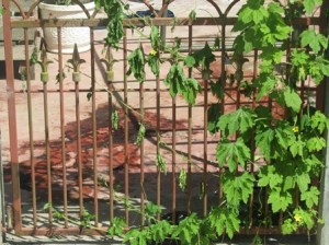 The blood stained yard of the businessman. [iNews' Photo]