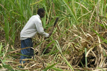 LETTER: Undeniable fact that coalition woefully neglected agriculture sector