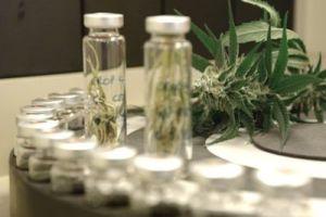 marijuana-research