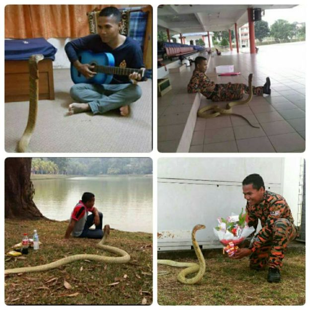 Mr Hussin started working with snakes in 2007 (Abu Zarif Husin images)