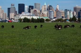 Da Manhattan al Liberty State Park, NJ per un tuffo nel passato.
