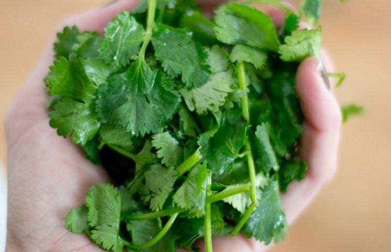 cilantro in salsa