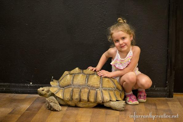 kayla-and-the-tortoise