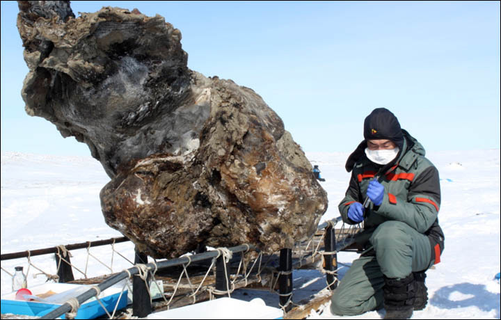 Woolly-Mammoth-could-be-cloned