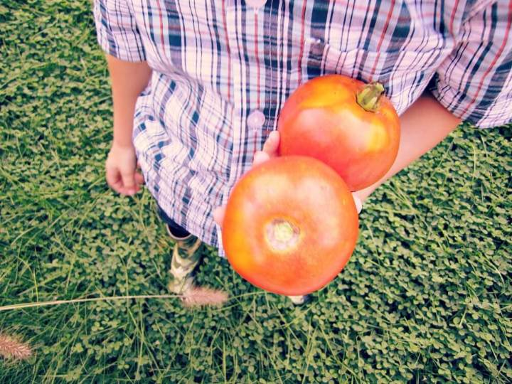 toddlers and tomatoes