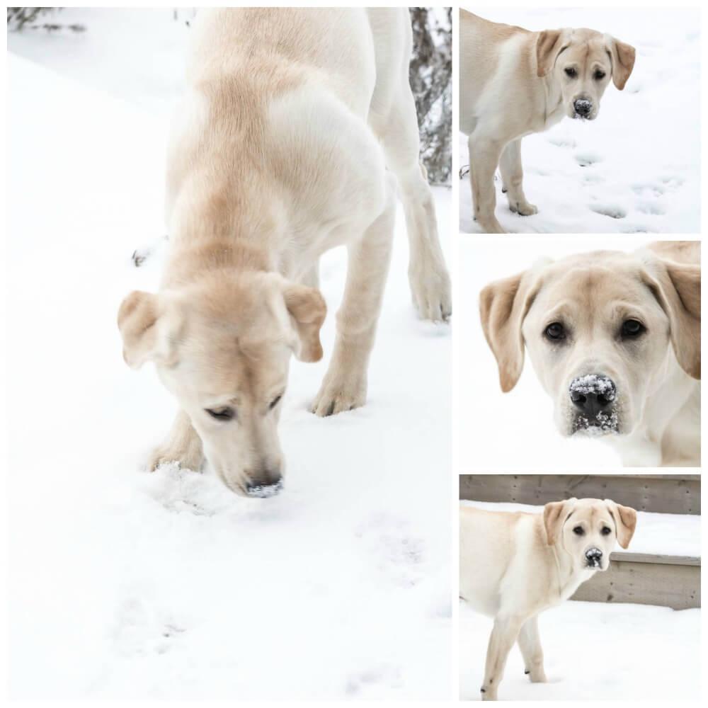Luna Lovedog's puppy treats   www.infinebalance.com