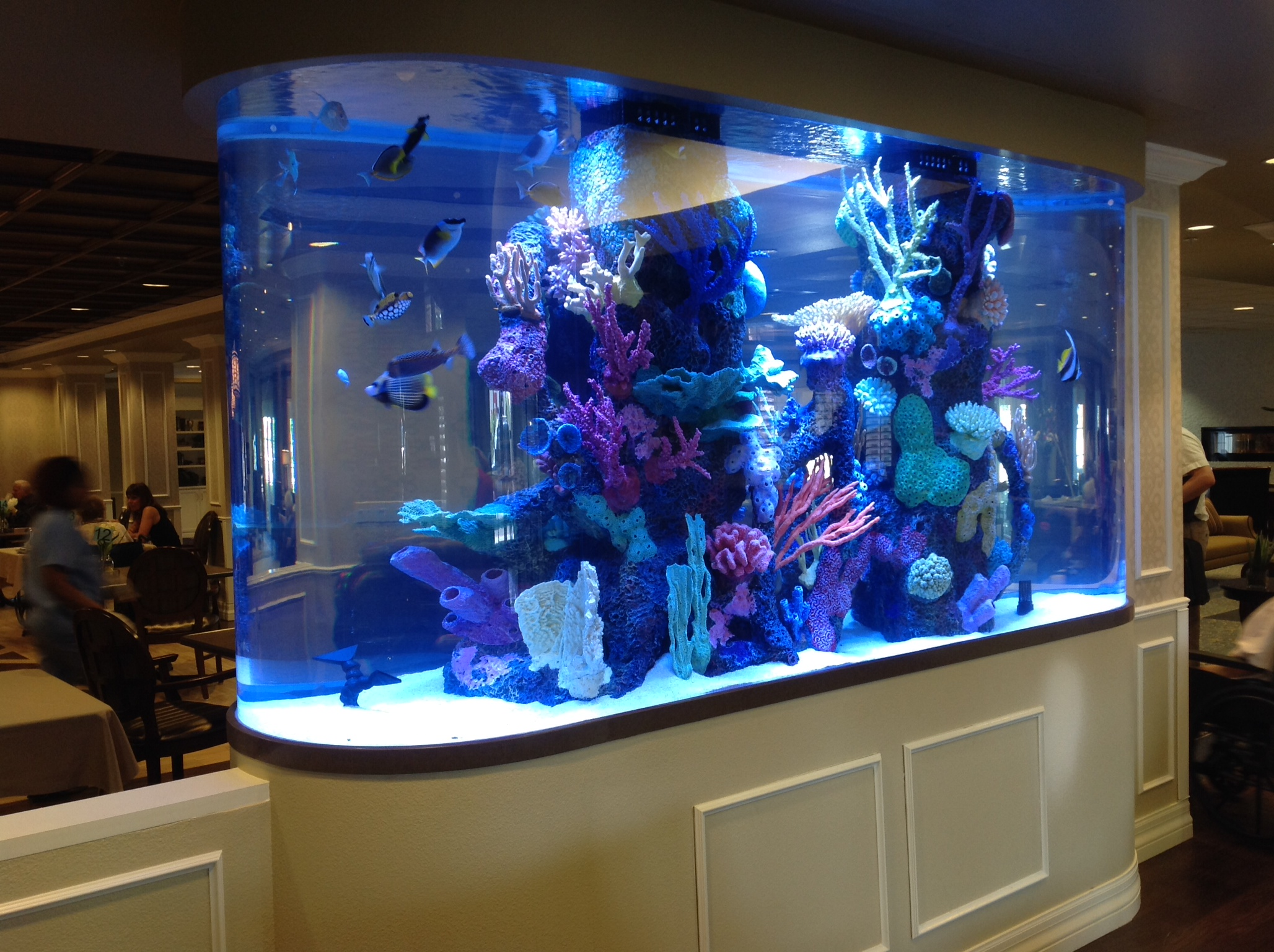 1200 Gallon Race Track With Faux Reef Aquarium