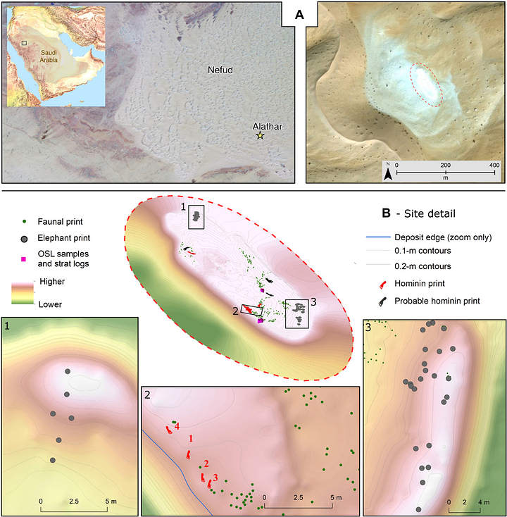 (A) Map showing the location of the site in the An-Nafud desert, Saudi Arabia. (B) Oblique three-dimensional map of the location of footprints, fossils and samples for optically stimulated luminescence (OSL). 120,000-Year-Old Human Footprints
