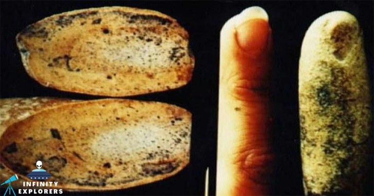 100 Million years old finger featured