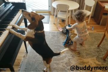 perrito toca el piano y canta