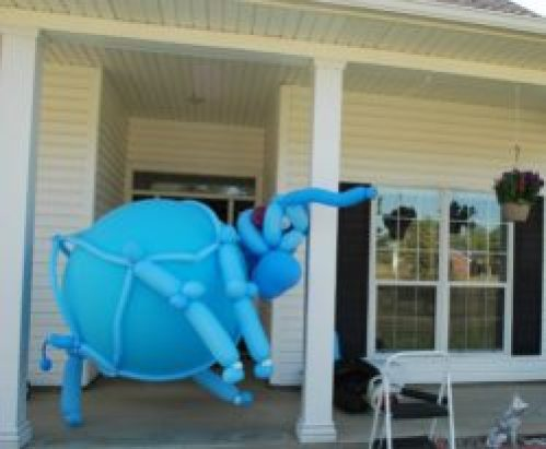 House Elephant
