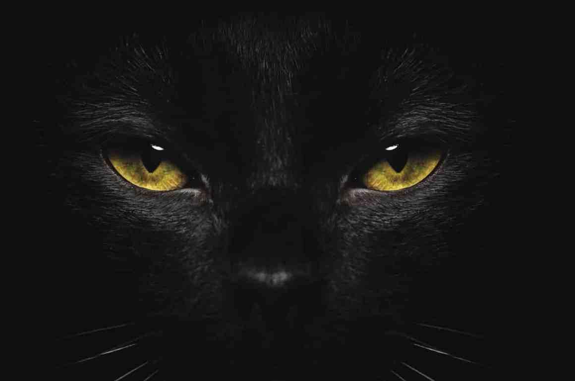 Psychologie de la superstition