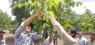 Catamraca-alumbrera-productores-nogales