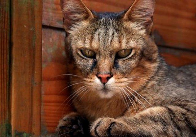 Neko no Kimochi Kaibo Zukan, el best seller del japonés Yuki Hattori, ha sido traducido al inglés como What Cats Want (Lo que quieren los gatos).