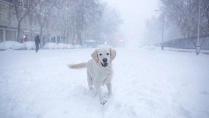 Un perro corre en la nieve (Benjamin CREMEL / AFP)