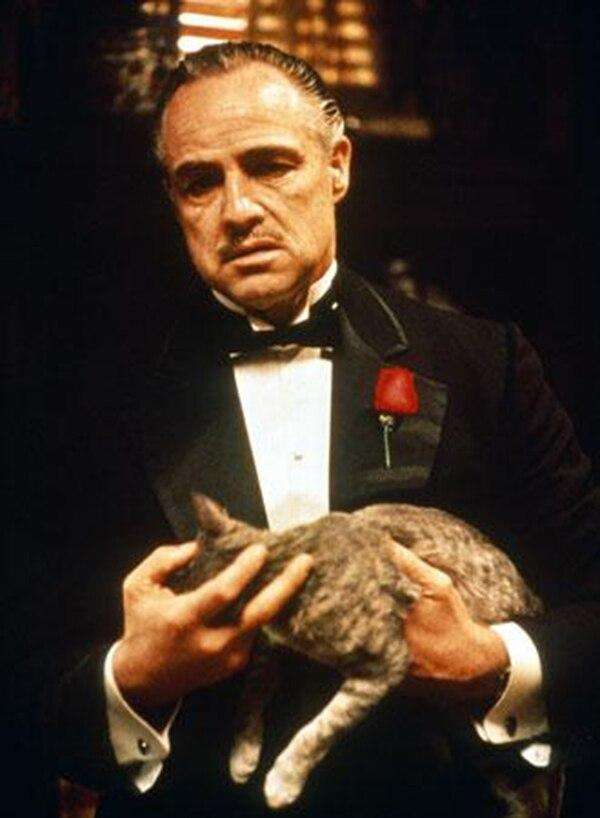 Marlon Brando era fanático de los gatos. Se dice que fue él quien sugirió esta escena del Padrino en la cual acaricia un gatito mientras mantiene una reunión