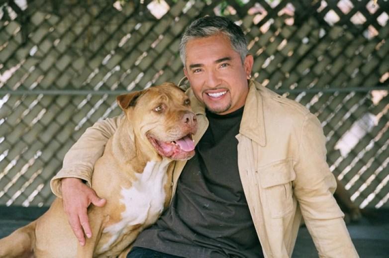 César Millán se especializa en la rehabilitación de perros agresivos