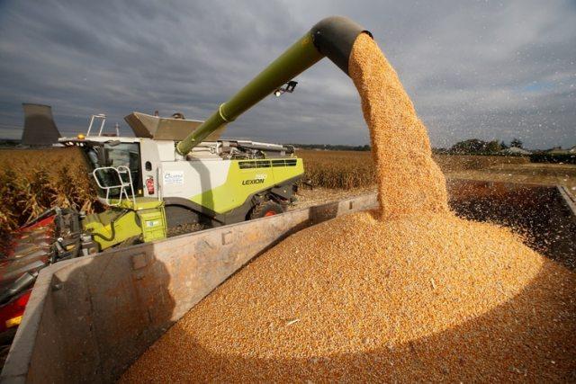 El maíz, con producción récord (REUTERS/Pascal Rossignol)