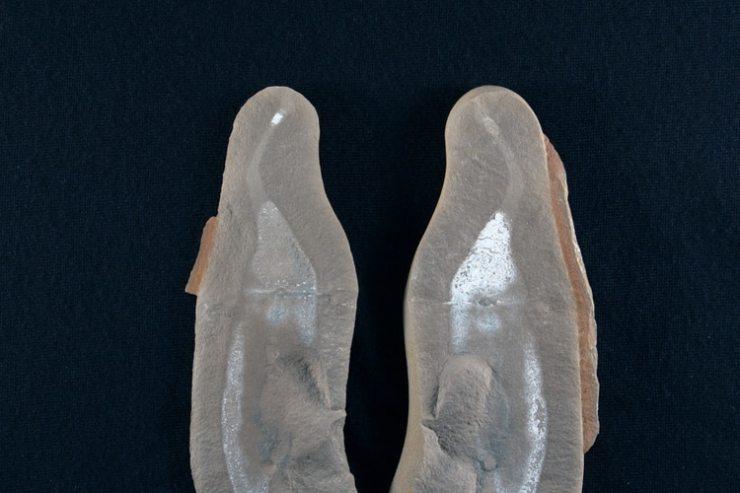 Fósil del Monstruo Tully (Shutterstock)