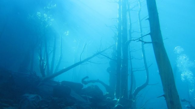 """El """"Bosque Sumergido"""" es una de las grandes atracciones turísticas de Villa Traful (Shutterstock.com)"""