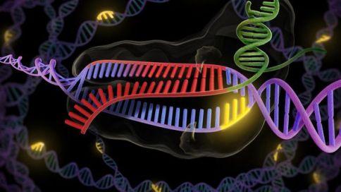 La técnica CRISPR-Cas9 permite editar el mapa del genoma humano