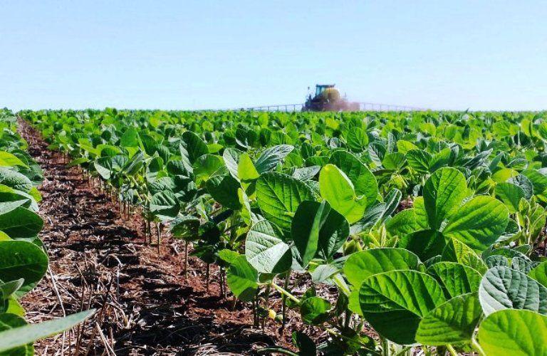 Según el sector, hay 25 millones de toneladas de soja aún en el campo