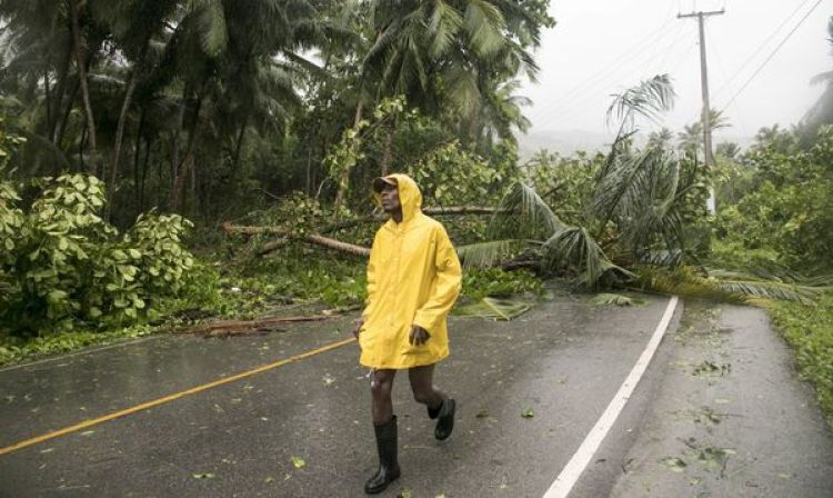 Árboles caídos en Samana, República Dominicana (AP)