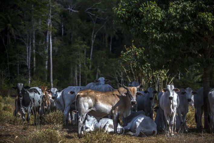 El Parque Nacional Jamanxim es un parque nacional en el estado de Pará, Brasil. Foto: Dado Galdieri/Bloomberg