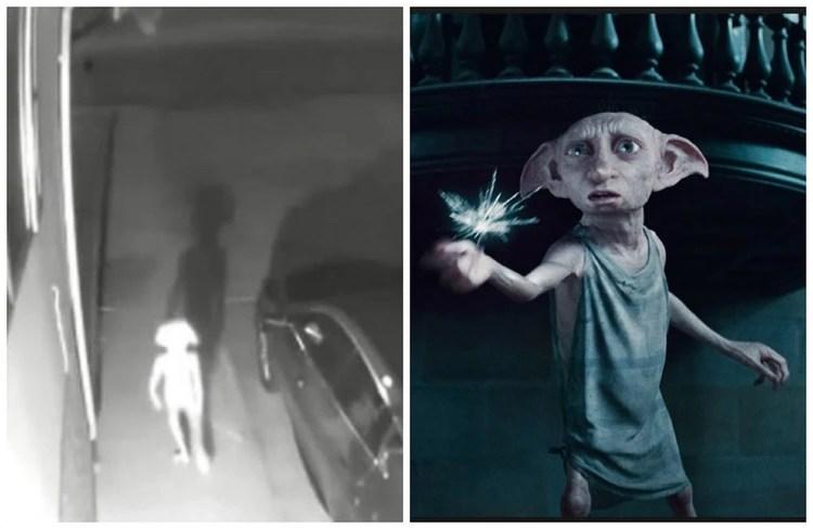 Muchos usuarios compartieron explicaciones razonables en sus comentarios, pero otros pensaron que podía tratarse de un alien y señalaron su parecido con Dobby, el elfo de Harry Potter (Foto: captura de pantalla video Facebook Vivian Gómez/ Warner Bros)