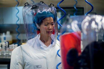 La doctora Shi Zhengli en una foto tomada el 23 de febrero de 2017 en el laboratorio P4 del Instituto de Virología de Wuhan (Johannes Eisele/ AFP)
