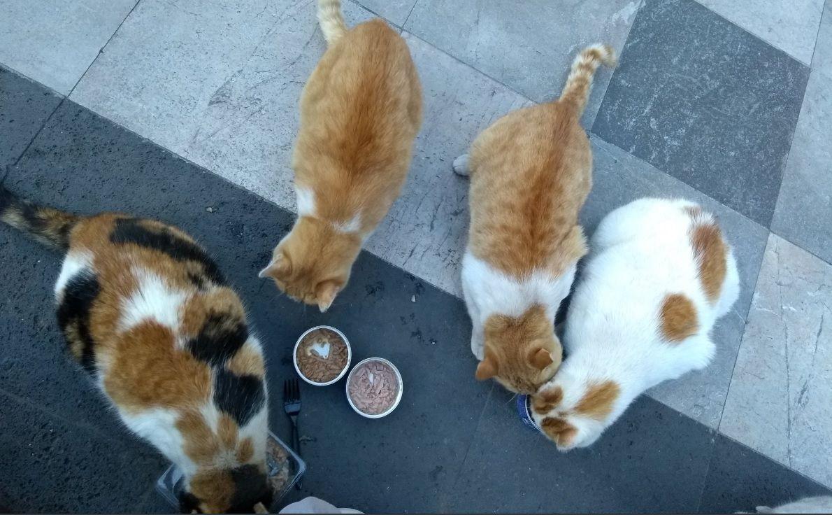 Algunos de los felinos responden a los nombres de Gandalla, Tía Gorda, Carlota, Carrusel o Mocos (Fotos: Twitter)