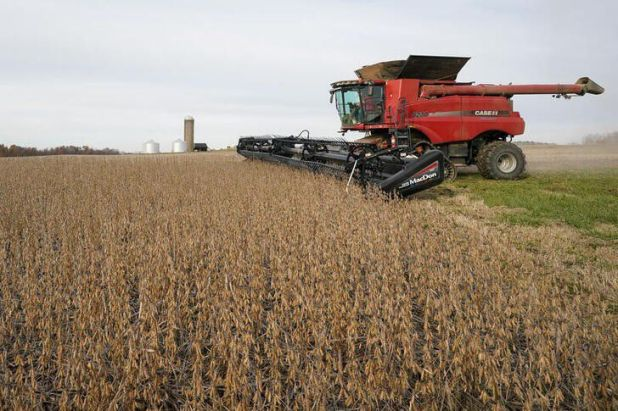 Ya comenzó la cosecha de soja en algunas regiones del país  REUTERS/Bryan Woolston