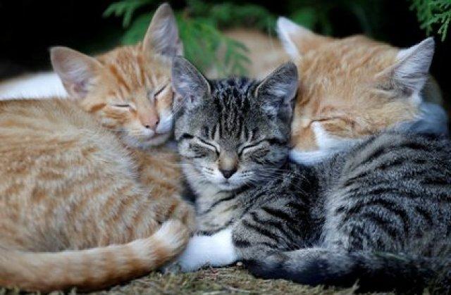 Los gatos son criaturas en extremo sensibles que expresan una multitud de sentimientos mediante su lenguaje corporal, explicó el veterinario japonés. (REUTERS/David W Cerny)
