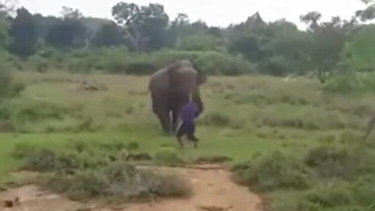 Un hombre murió aplastado en Sri Lanka por un elefante. (Foto: Especial)