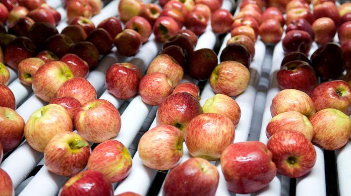 La cosecha de manzanas y peras de la provincia de Río Negro comenzará este 10 de enero (Prensa Agroindustria)