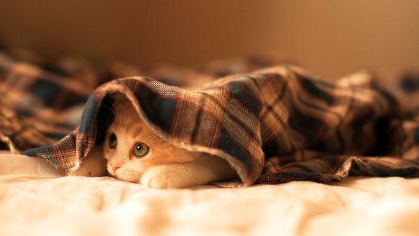 El Día Internacional del Gato también funciona como medio de concientizaciónn sobre el maltrato animal (iStock)