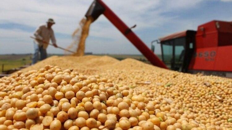 """El agro, una de las únicas actividades en """"verde"""", creció 10,8%"""