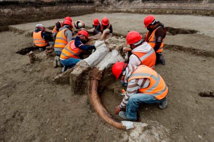 """El experto dijo que se tienen varios tipos de evidencias """"ya que hay restos de animales que aparecen dispersos y otros que aparecen casi completos"""" como ocurrió con un mamut cuya osamenta fue hallada en más del 90%. (Foto: EFE)"""