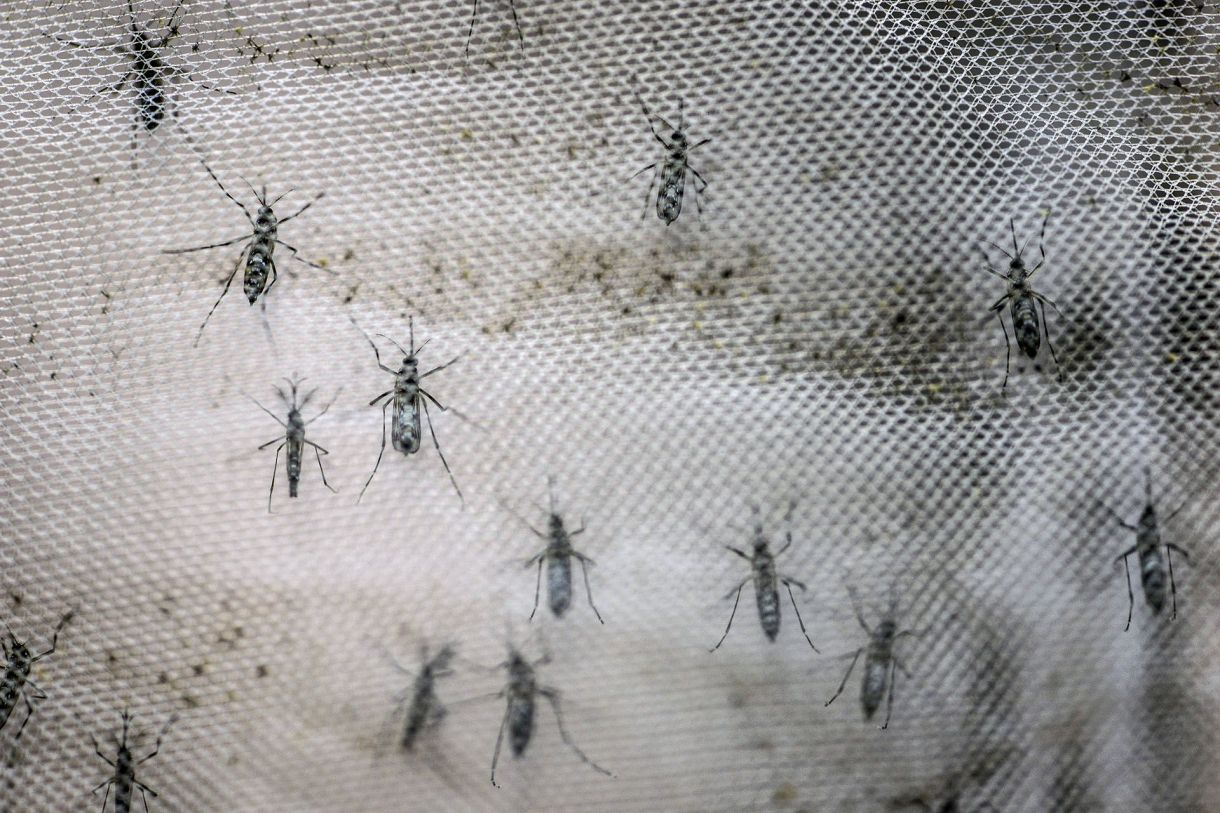 El dióxido de carbono que exhalamos influye en la elección del mosquito al picarnos (Shutterstock)